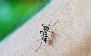 Malaria Poses A Risk To Contractors And Beyond