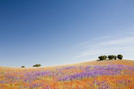 Portugal's Seven Provinces – Which One Will Suit You?